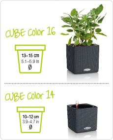 CUBE Color tamaños