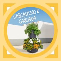 CASCADA & CASCADINO Color
