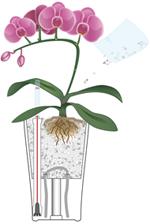 Orchideen in LECHUZA pflanzen