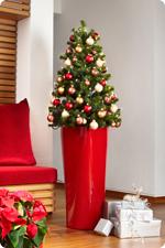 Pflegetipps für Weihnachtsbäume in LECHUZA Pflanzgefäßen