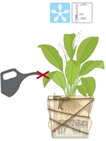 Pflanzen überwintern